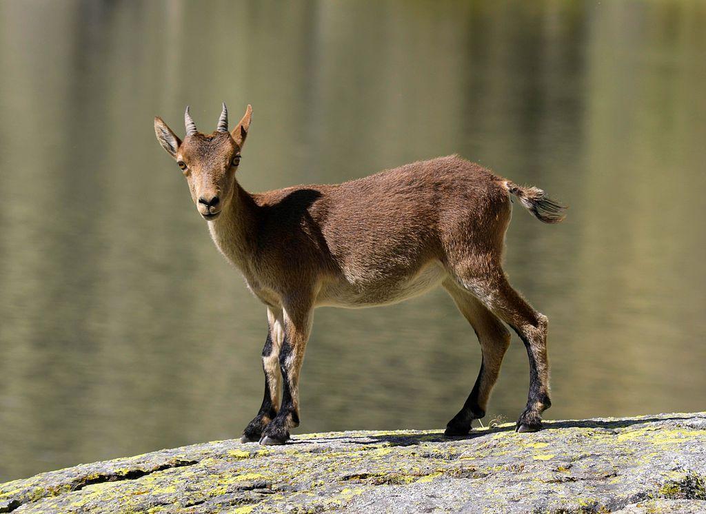 Portugal é o 2.º país da Europa com mais espécies de mamíferos e plantas em perigo