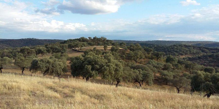Cientistas utilizam geocaching como ferramenta para avaliar valor cultural dos ecossistemas