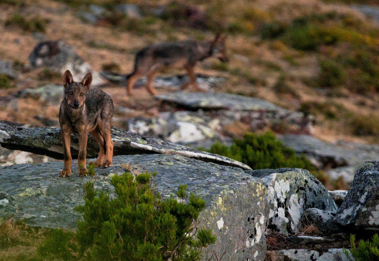 """Documentário """"Rewilding, um novo caminho para a natureza em Portugal"""" estreia em Novembro"""