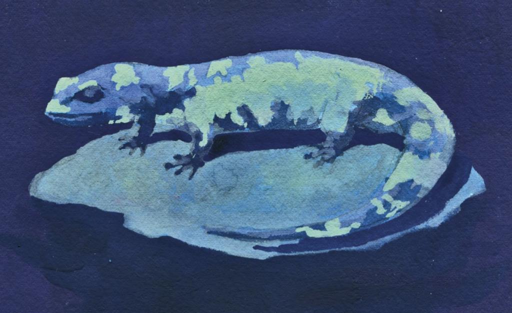 A fiscalização às salamandras