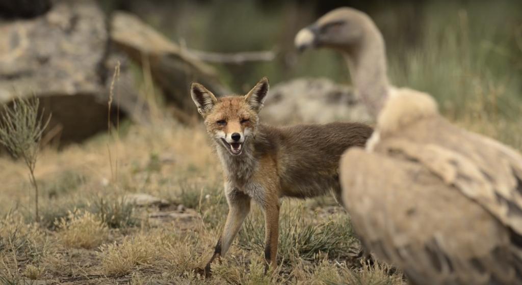 """Documentário """"Rewilding, um novo caminho para a natureza em Portugal"""" estreia este mês em live-streaming"""