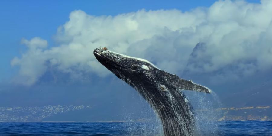 """Série documental """"O Nosso Planeta"""" foi filmada em 50 países e vai mostrar a importância da natureza"""