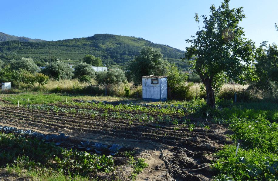 Agricultura biológica e sustentabilidade