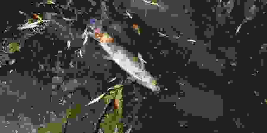 Crime ambiental no Rio Cértima, em Águeda, afecta população e Pateira de Fermentelos, a maior lagoa natural da Península Ibérica