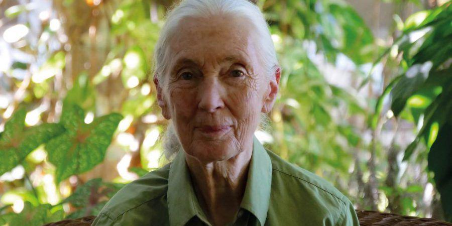 RTP2 estreia documentário sobre a vida e os projectos ambientais e sociais de Jane Goodall