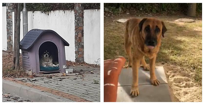Comunidades como cuidadoras formais de cães de rua