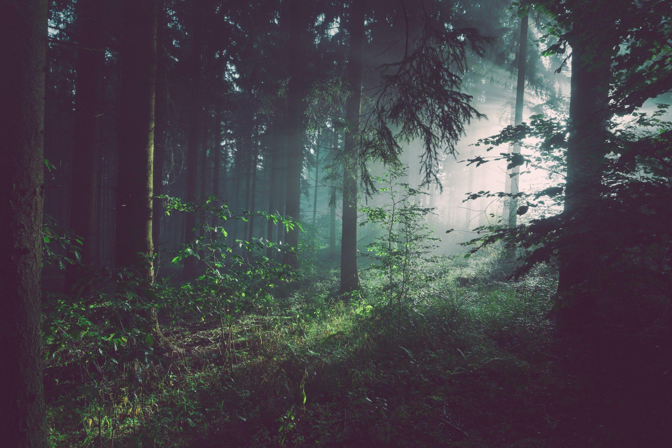 Pacto Ecológico Europeu. Comissão Europeia propõe nova estratégia para proteger e recuperar florestas