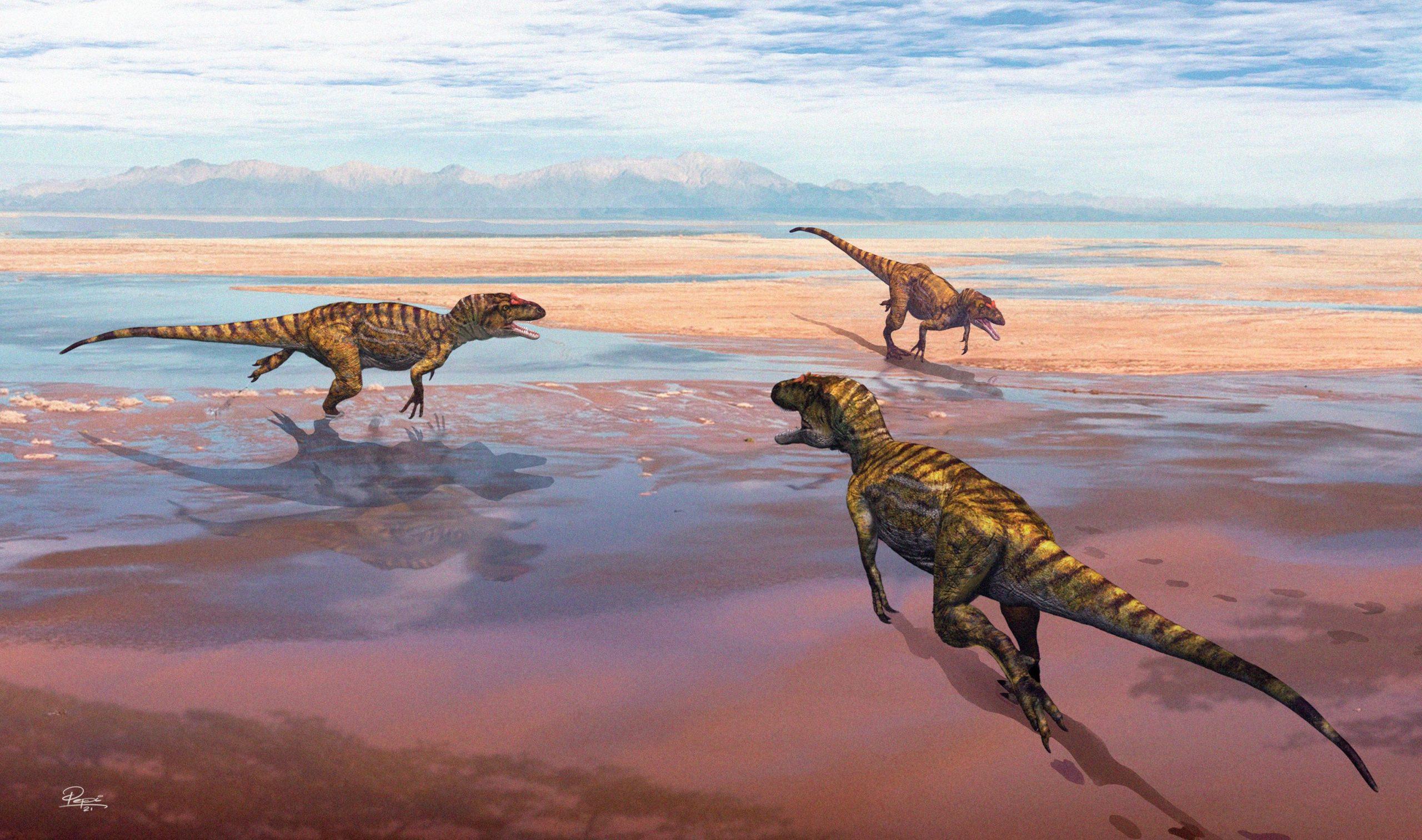 Estudo revela dados sobre pegadas de dinossauros carnívoros do Jurássico no Cabo Mondego